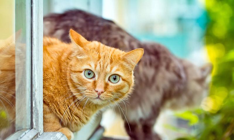 Gatos - Quitar olor a pis de gato ...