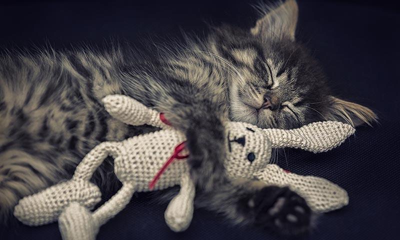 La letargia en los gatos: qué es y cómo tratarla