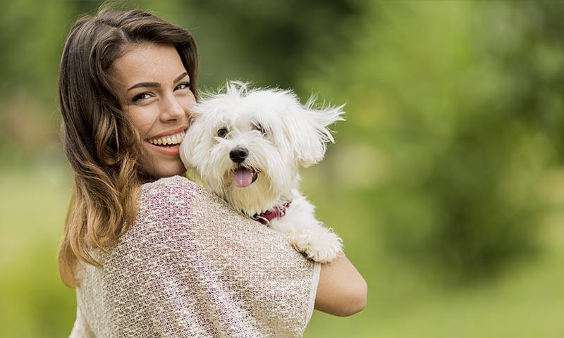 El bichón maltés: el perro que menos alergias produce