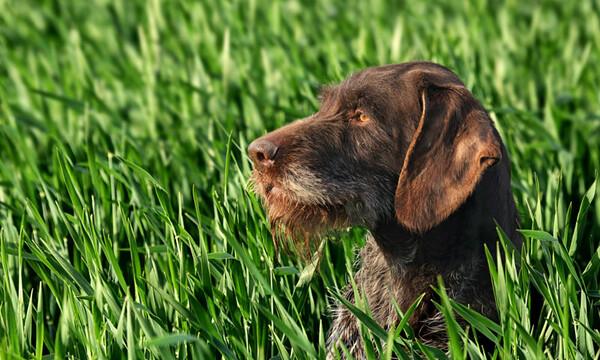 el perro puede enfermarse y mejorar solo