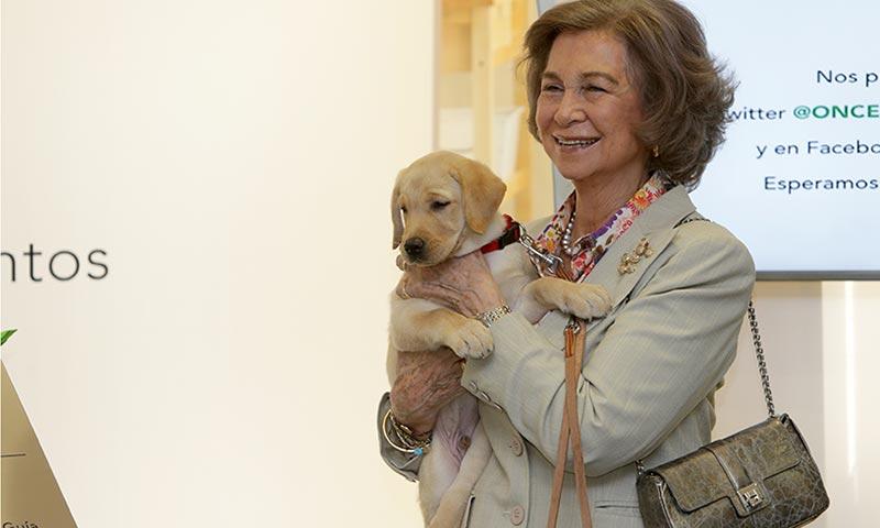 'Royals', aristócratas, actores... ¡todos ellos adoran a sus mascotas!