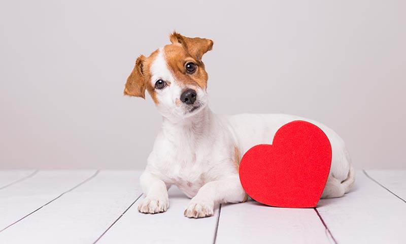 Descubre las razas de los perros más famosos