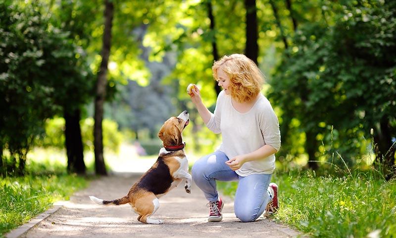 Si hablas a tu perro como si fuera un niño, te hará más caso