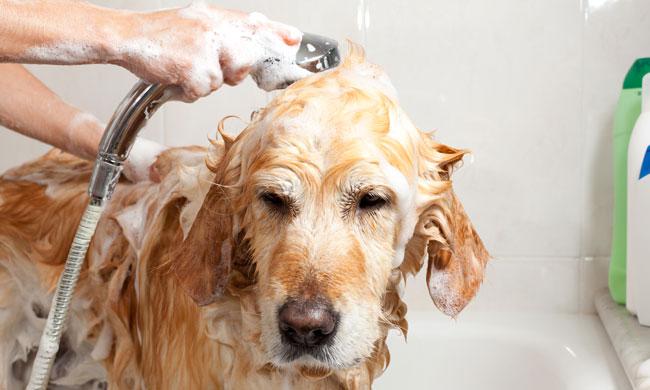 como eliminar los acaros de mi perro
