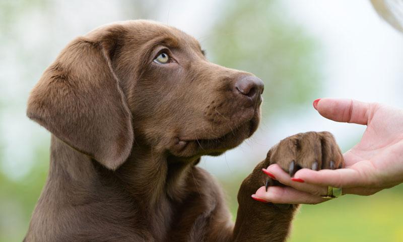 cefalexina causa micción frecuente en perros