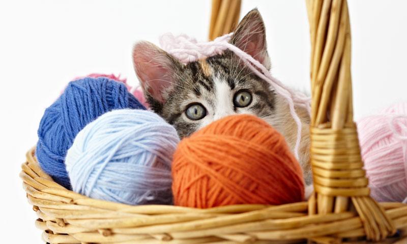 Accesorios de diseño para tu gato