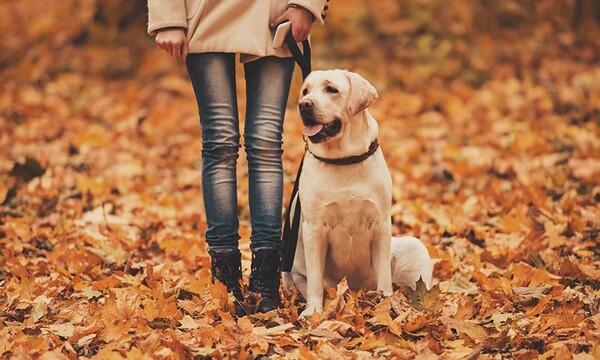 Résultat de recherche d'images pour perros y el otoño