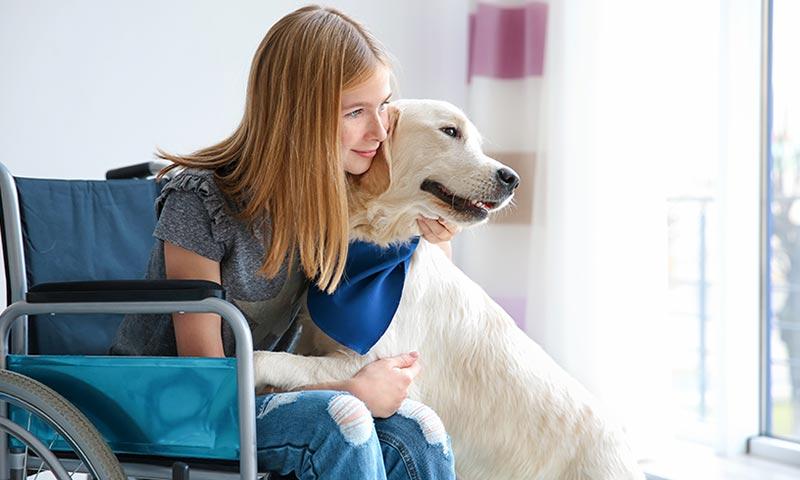 Darwen, Haru y Pipa: de perros abandonados a terapeutas