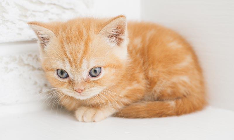 Consejos para cuidar a un gatito pequeño