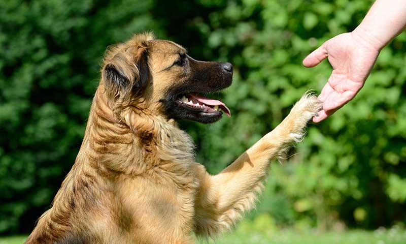 Doctor Guau: la terapia de perros que ayuda a la recuperación de los niños