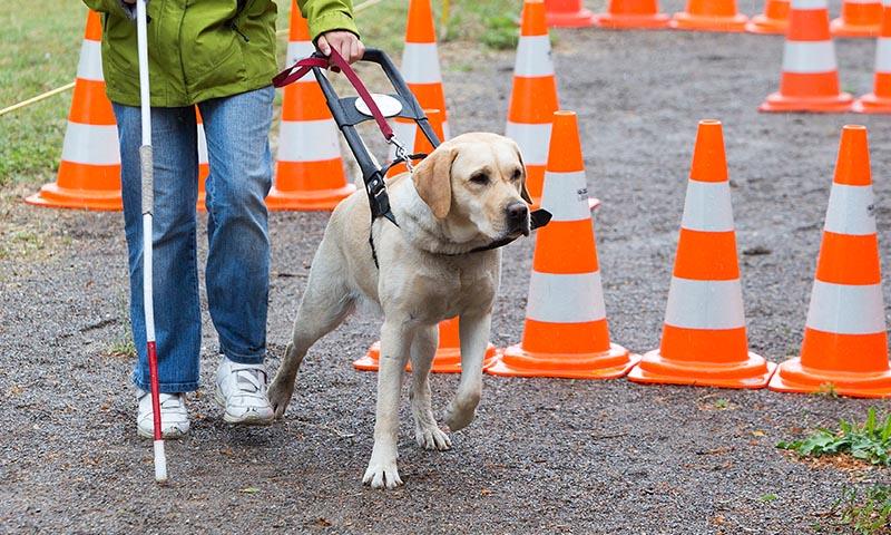 Así son los perros más trabajadores