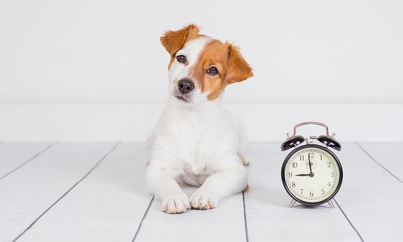 Razones por las que podrías estar acortando la vida de tu perro