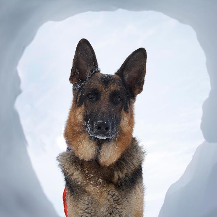 Las Razas De Perro Más Aptas Para Rescate Foto