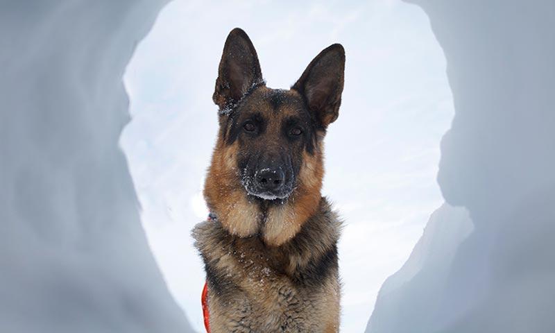 Los perros que buscan desaparecidos y participan en labores de rescate