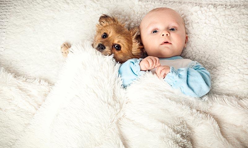 Prepara a tu perro para la llegada de un bebé al hogar