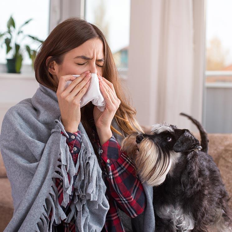 que hacer para no tener alergia a los perros