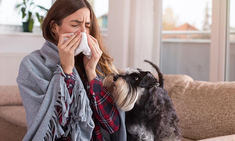 ¿Tienes alergia a los perros? Hay razas que sí puedes tener en casa
