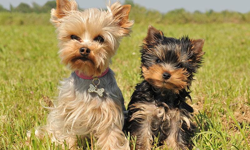 Perros nuevos en casa