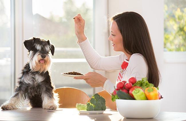 Sí, soy vegana... puede serlo mi perro?