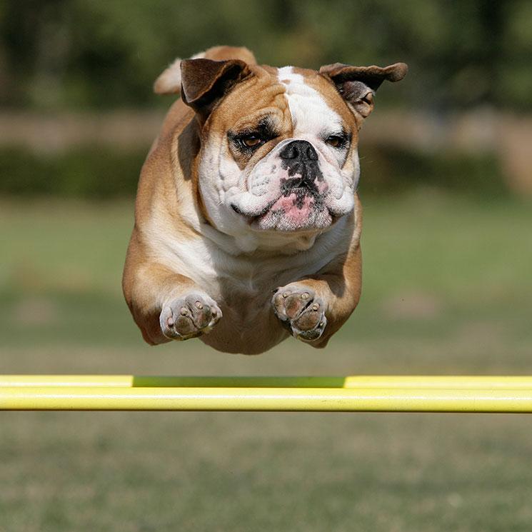 Rudy, el gran protagonista viral de los Oscar caninos