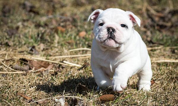 Mascotas Abre En Madrid El Primer Café De España En El Que Puedes Adoptar Perritos