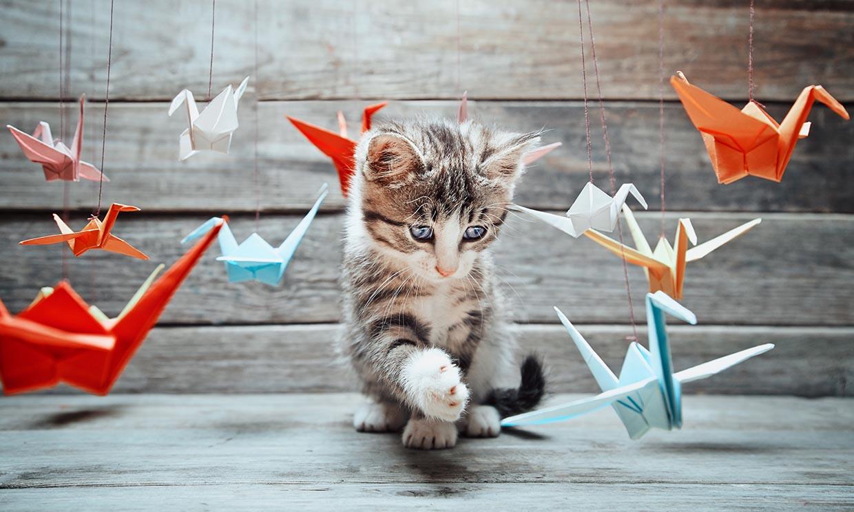 Nos encantan los vídeos de gatitos, y la ciencia sabe por qué