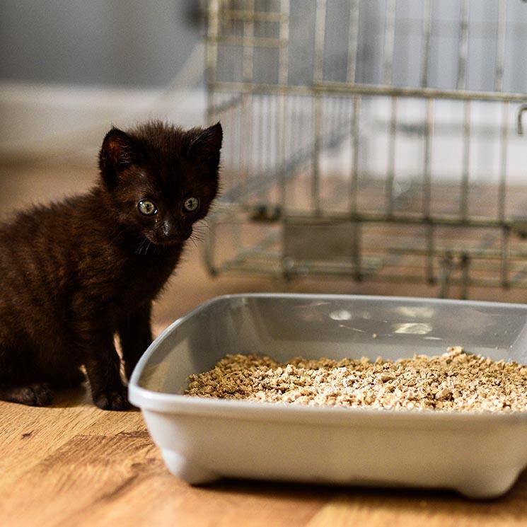 Si tu gato no usa el arenero puede que sea por uno de estos motivos
