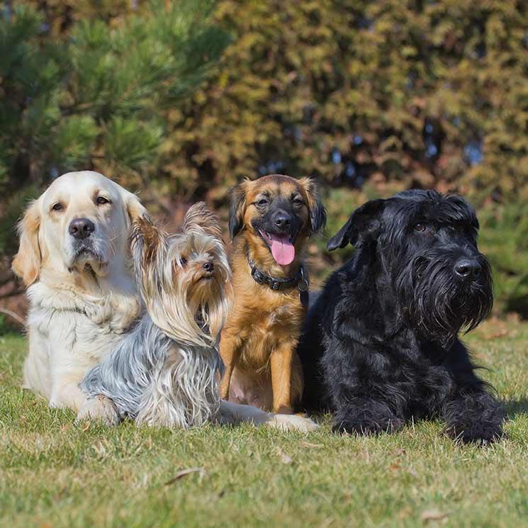 Estas son las razas de perro preferidas según el país - Foto