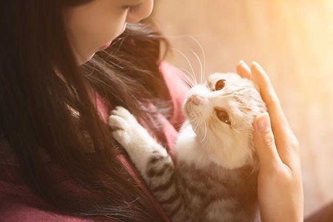Actitudes de tu gato que se pueden corregir