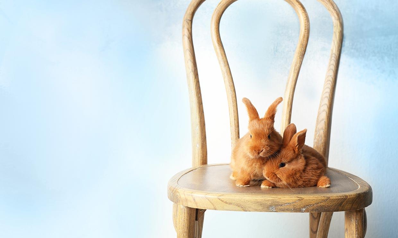 Las razas de conejo que querrás tener como mascota