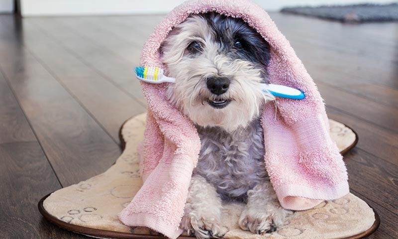 'Brackets' para perros: una inversión en salud y bienestar animal