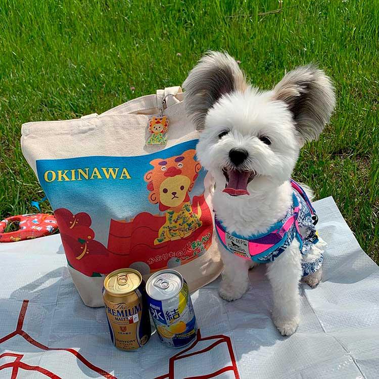Goma celebrando un picnic