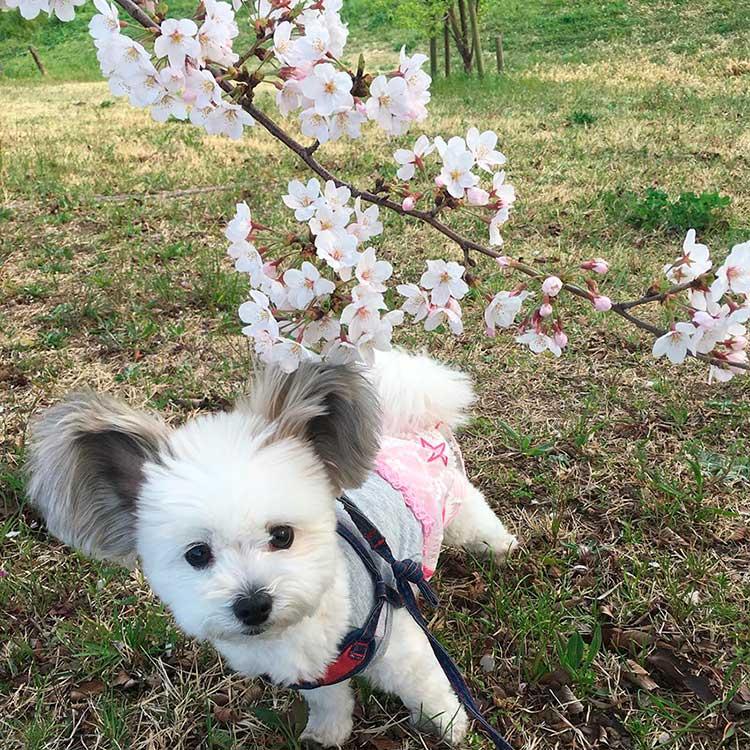 Goma saluda a la primavera