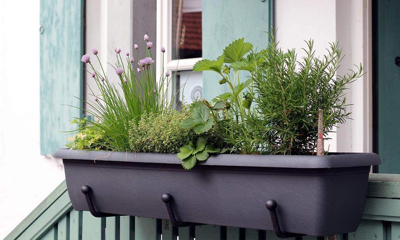 Estas plantas solo necesitan el agua de lluvia para crecer