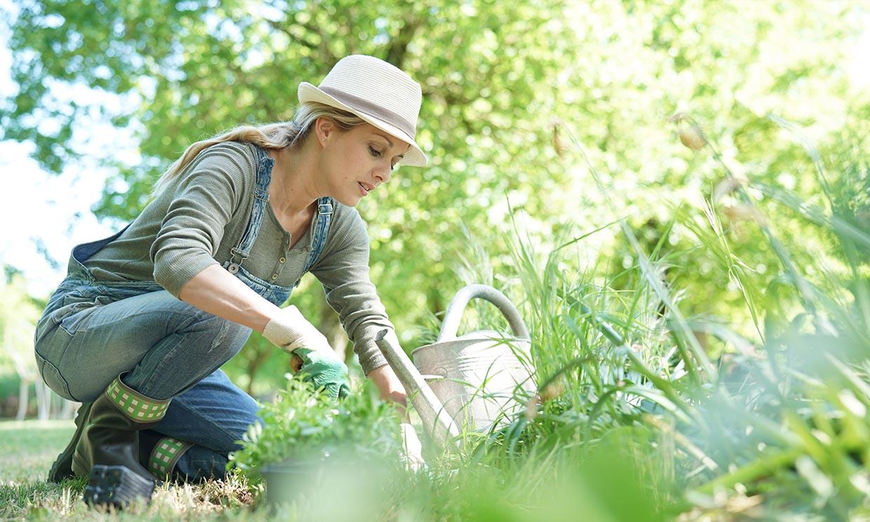 Protege tu pequeña huerta de las plagas de forma natural