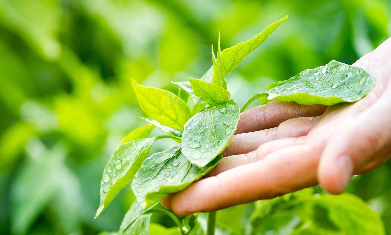 Si tocas tus plantas, crecerán peor
