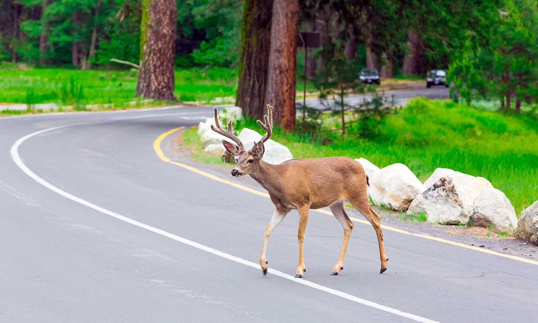 'Puentes verdes' o cómo evitar la muerte de miles de animales salvajes en las carreteras