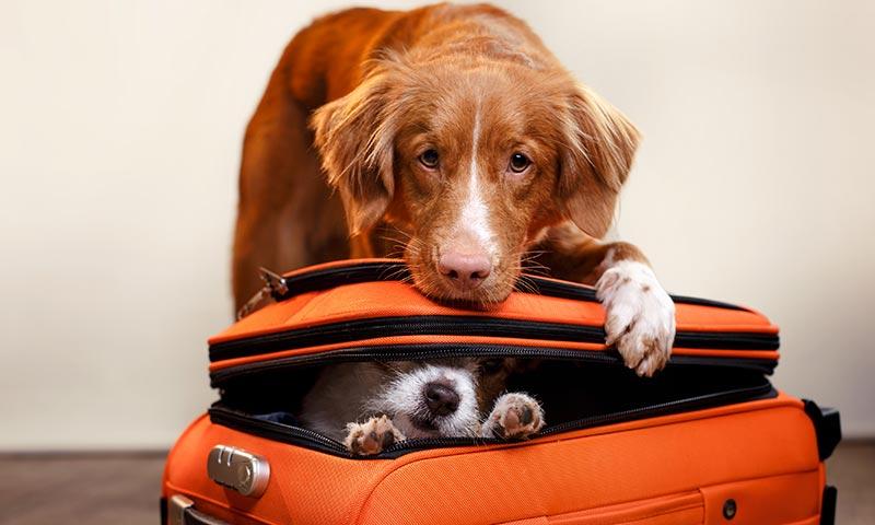 Todo lo que tienes que preguntar si este verano viajas con tu perro