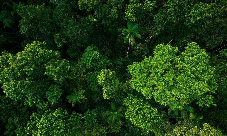 Tailandia 'bombardea' el país con semillas para combatir la deforestación