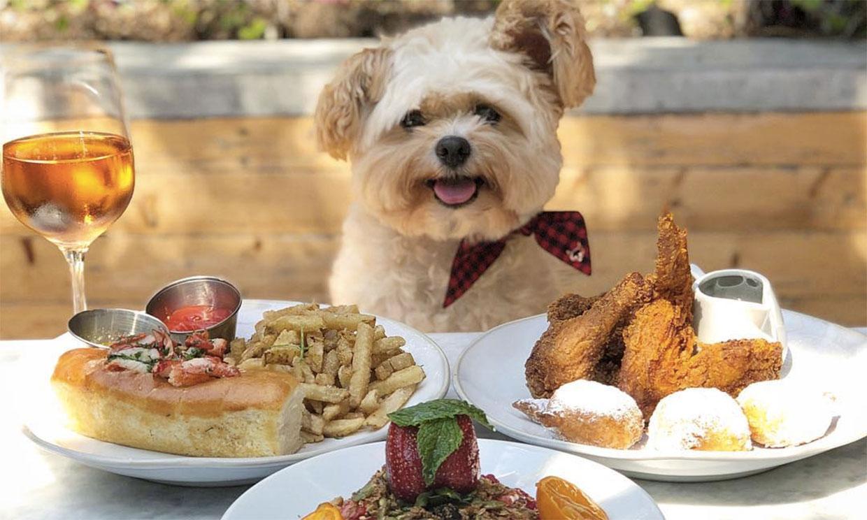 Popeye, el perrito 'foodie' que enamora en Instagram
