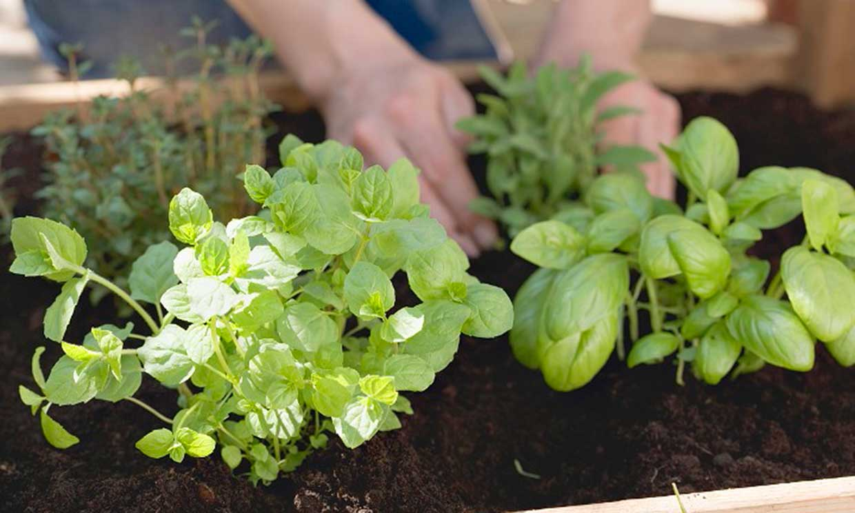 Convierte tu huerto en un botiquín natural