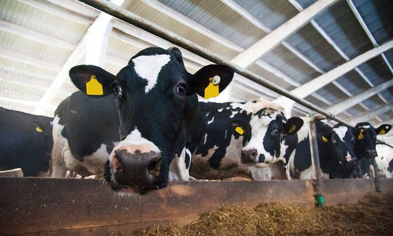 Las granjas industriales de producción cárnica son una de las principales fuentes de contaminación