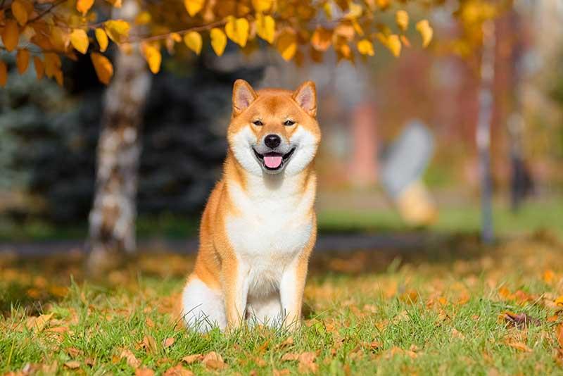razas perro raras