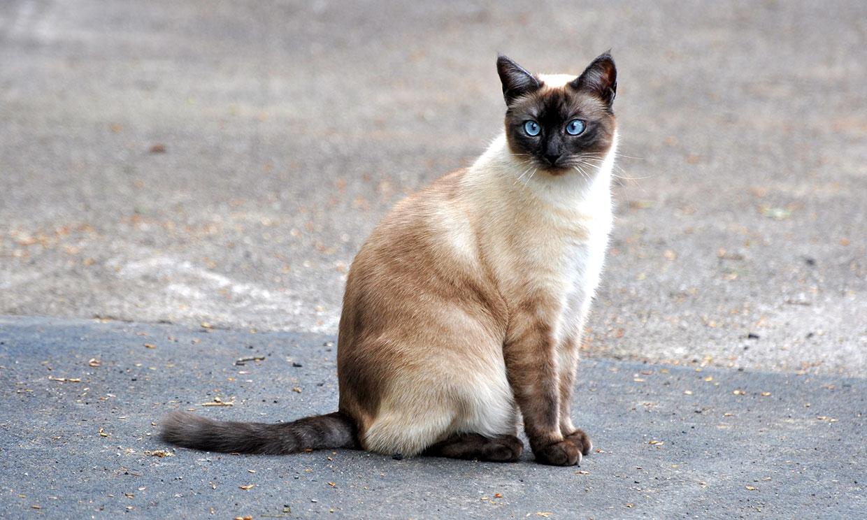 La travesura de un gatito que le pudo haber costado el trabajo a sus dueñas