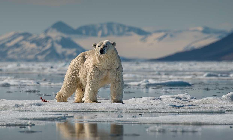 Así afecta la crisis climática a los animales