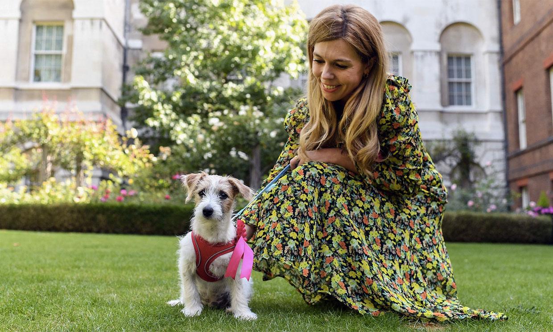 Dilyn, el nuevo residente de Downing Street