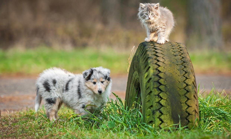 ¿Estás preparada para adoptar una mascota?