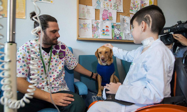 Perros terapeutas, un proyecto pionero en el hospital Materno Infantil de Granada