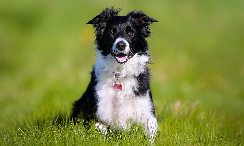 Perros que convierten en fenómenos virales sus divertidas ocurrencias