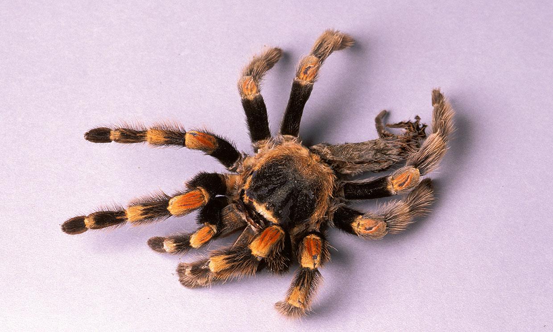 Tela de araña, un recurso para crear un material alternativo al plástico
